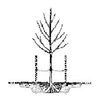 planting_instructions